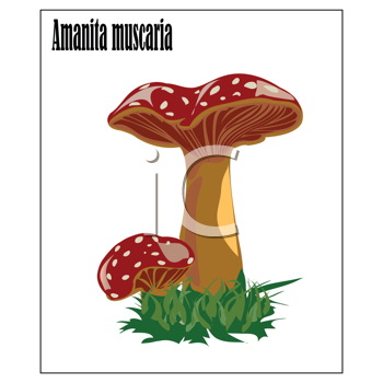 Royalty Free Clipart Image of a Mushroom